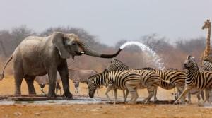 Wildlife en Afrique