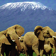 Elephants et Mount Kenya