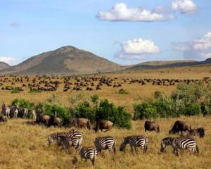 masai-mara-reserve