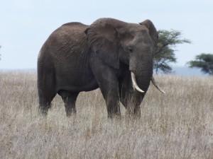 Eléphants mission avec Globalong