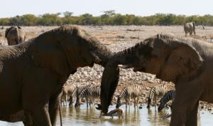 éléphants en Afrique