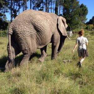 globalong elephant afrique