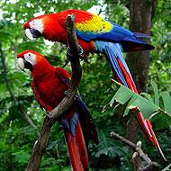 Voyager autrement au Costa Rica