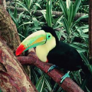 oiseau Costa Rica