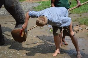 Bénévolat avec éléphants -Globalong au Sri Lanka