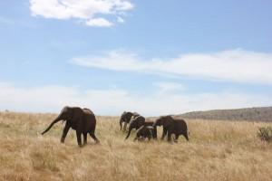 Humanitariat en Afrique avec Globalong au Kenya