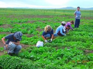 Eco volontariat en Mongolie