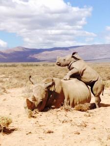 Safari en Afrique Globalong