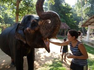 Mission avec les éléphants au Sri Lanka avec Fiona
