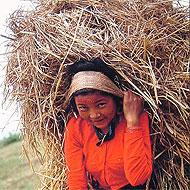bénévolat Népal Globalong
