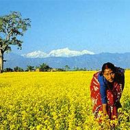 Globalong propose des missions humanitaire au Népal
