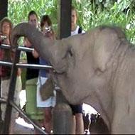 Partir avoir les éléphants au Sri Lanka avec Globalong