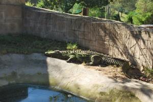 Mission de bénévolat avec les animaux sauvages et Globalong