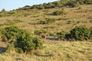 Paysages en Afrique du Sud dans une réserve naturelle Globalong