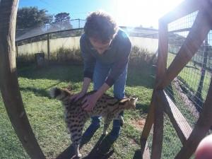 Mission de bénévolat international avec les chats en Afrique du Sud