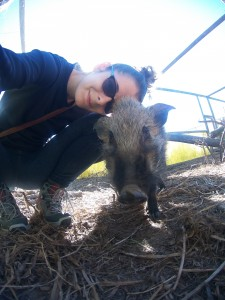 Volontariat animalier GlobAlong