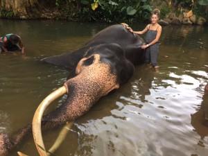 Volontaire en asie - GlobAlong - Sri lanka
