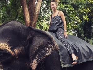 Bénévolat avec les animaux Afrique du Sud