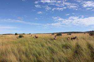 Apprendre à faire des photos avec GlobAlong - Kenya