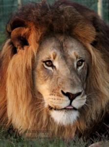 Photographier des animaux sauvages en Afrique du Sud - GlobAlong