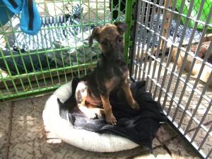 Petit chien en afrique du Sud dans le refuge - GlobAlong