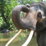 bonjour-elephant