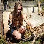 chat-serval-volontaire